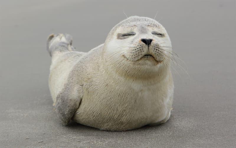 Nature Story: #14 Grey seal pup