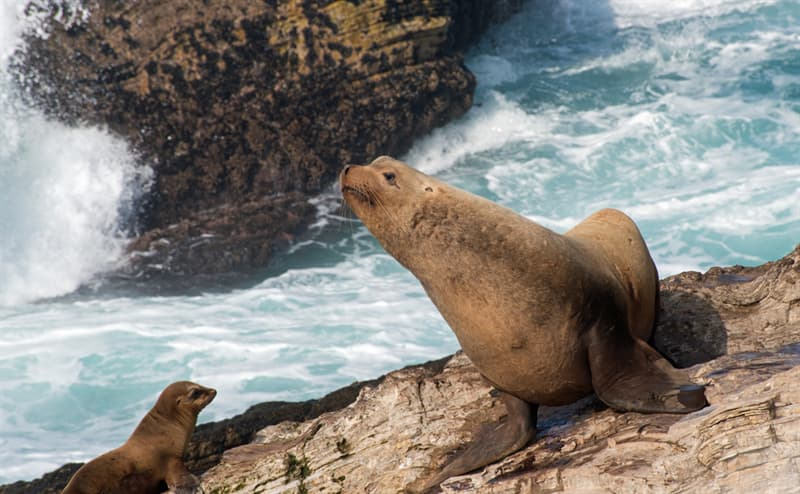 Nature Story: #4 Steller sea lion