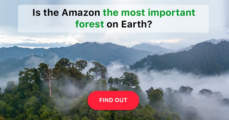 Science Story: Does the Amazon rainforest really produce 20% of the world's oxygen?