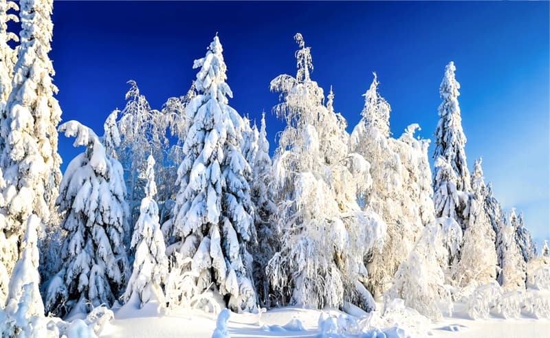 Geography Story: #10 Silent winter forest