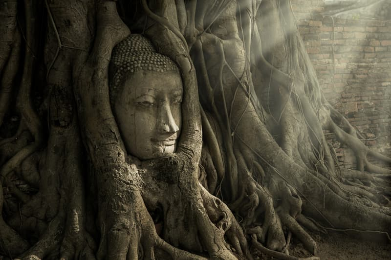 Culture Story: #7 Mysterious Ayutthaya Buddha head in tree roots