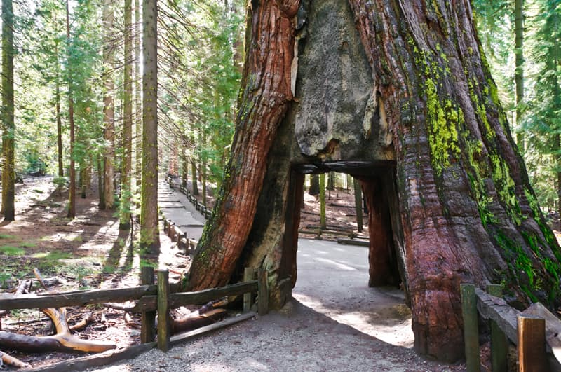 Geography Story: #7 Sequoia National Park Tree Tunnel is large enough for people to walk