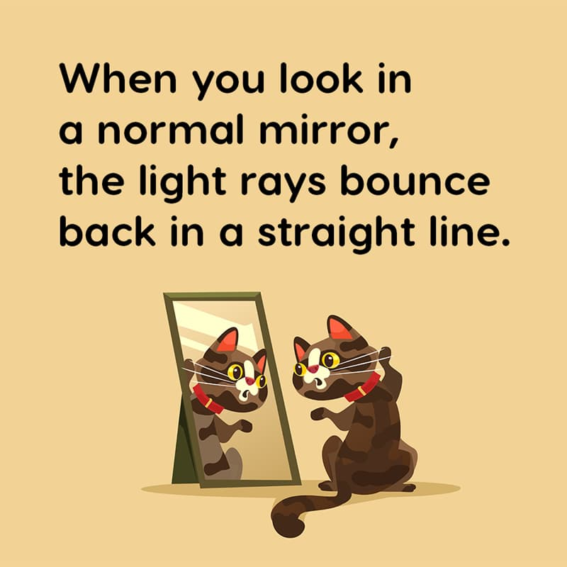 Science Story: When you look in a normal mirror, the light rays bounce back in a straight line