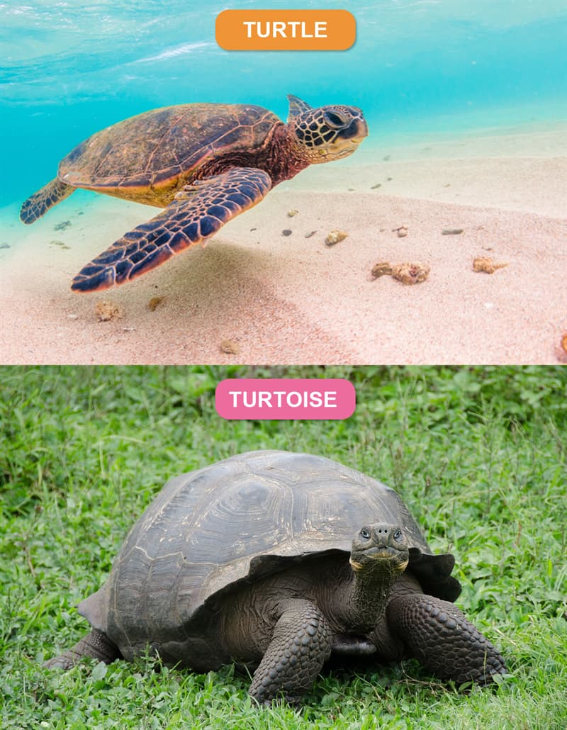 Nature Story: #1 Turtle vs. Tortoise
