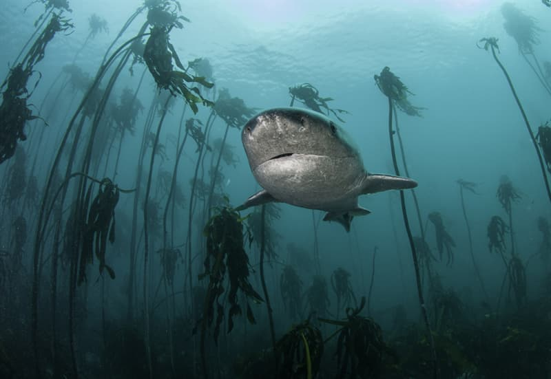 Geography Story: #11 Seven gill cow shark in the forest. Cape Town, South Africa