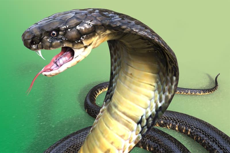 Science Story: #2 King Cobra venom - $153,000
