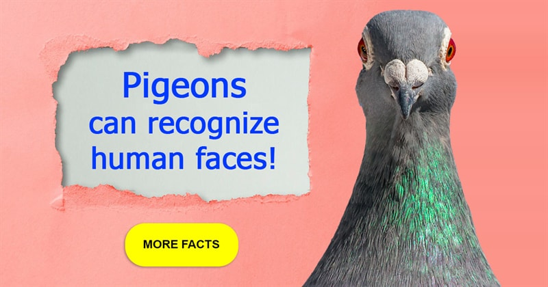 Nature Story: 5 cool facts about pigeons