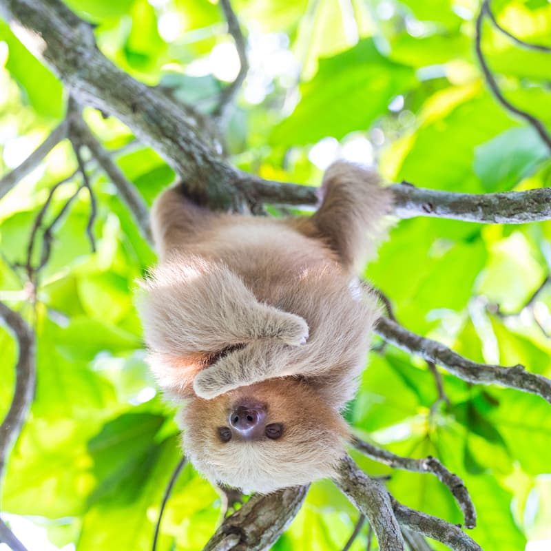 Nature Story: Interesting sloth facts