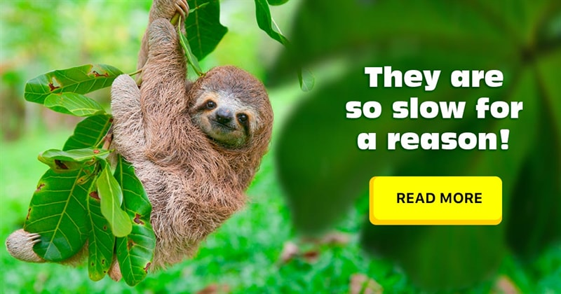 Nature Story: 5 odd and amazing facts about sloths