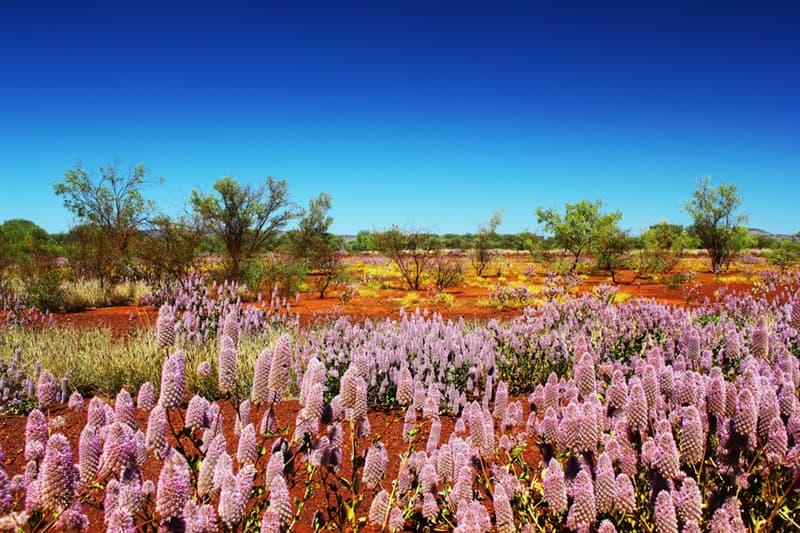 Nature Story: Wildflowers blooming