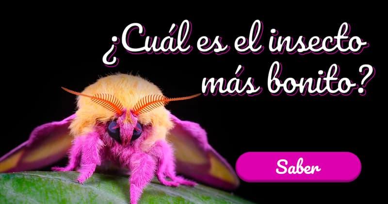 Naturaleza Historia: ¿Cuál es el insecto más bonito?
