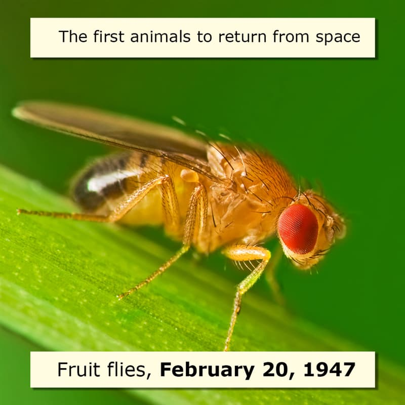 Science Story: Space firsts list first animal in space 1947