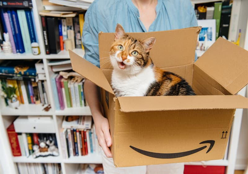 History Story: facts about Amazon shopping online Amazon loves pets cats dogs in the office
