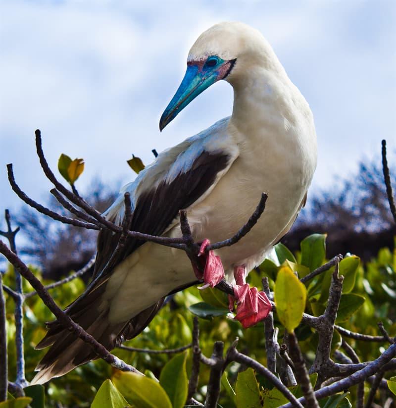 Nature Story: Birds of Ecuador