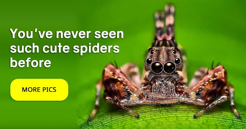 animals Story: Pictures of spiders that will make you love them
