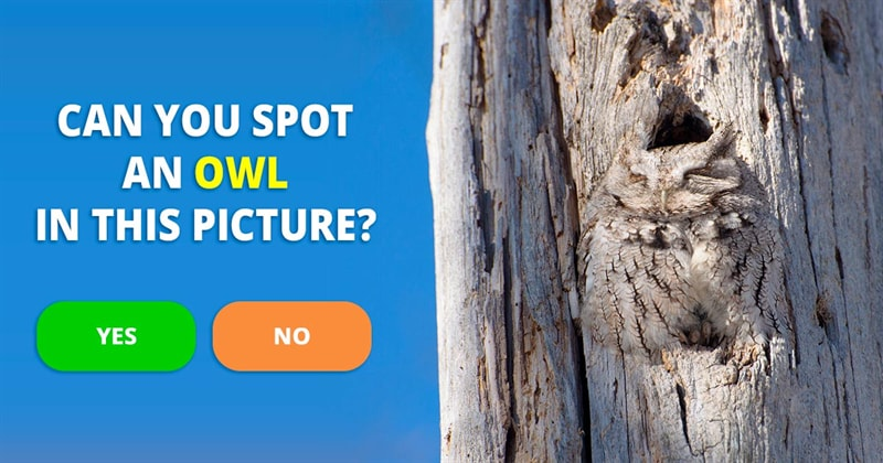 Nature Story: Pictures that prove owls are masters of hide and seek