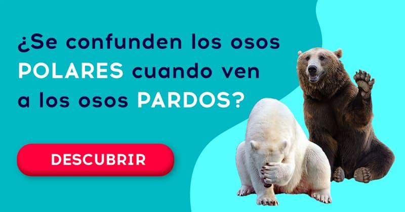 Geografía Historia: ¿Se confunden los osos polares cuando ven a los osos pardos?