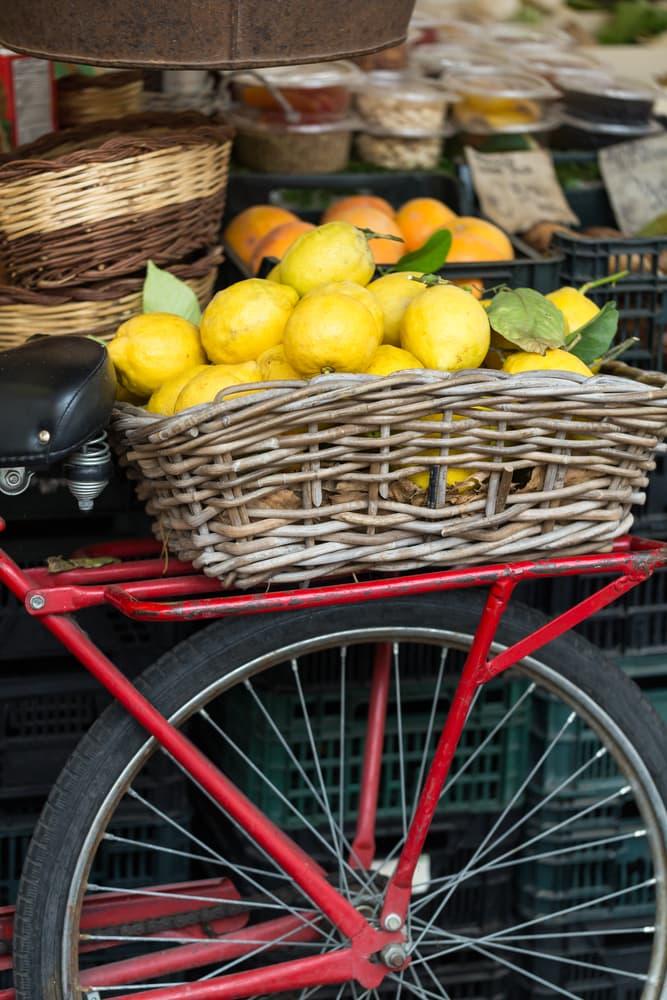 Nature Story: Riding a bike