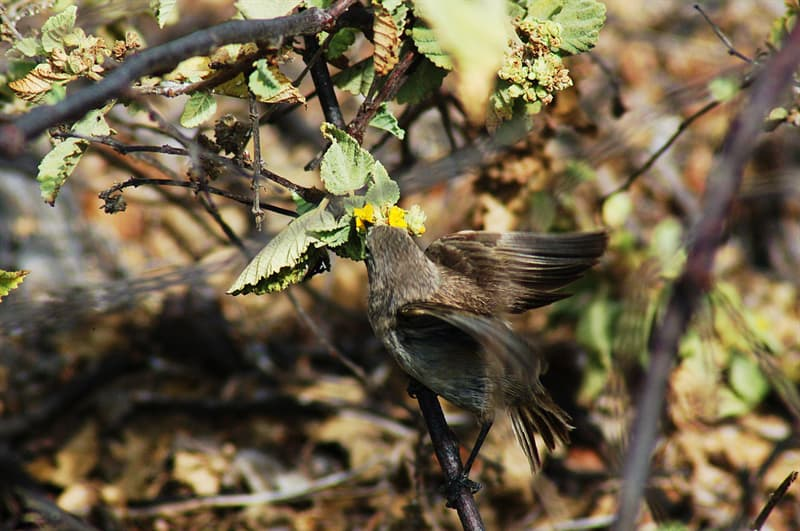 Nature Story: #2 There are vampire birds