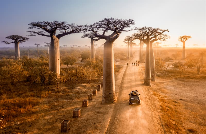 Geography Story: Baobab tree age
