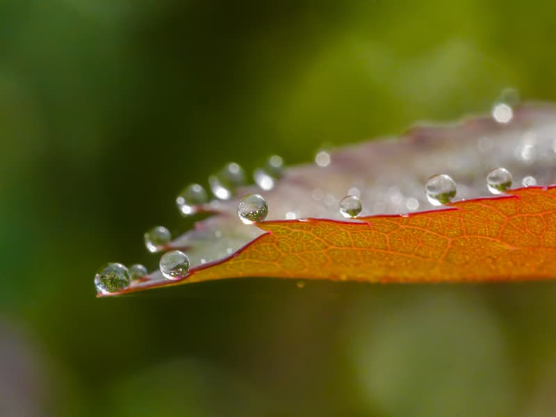 Nature Story: ​Macro photography water droplets on a leaf