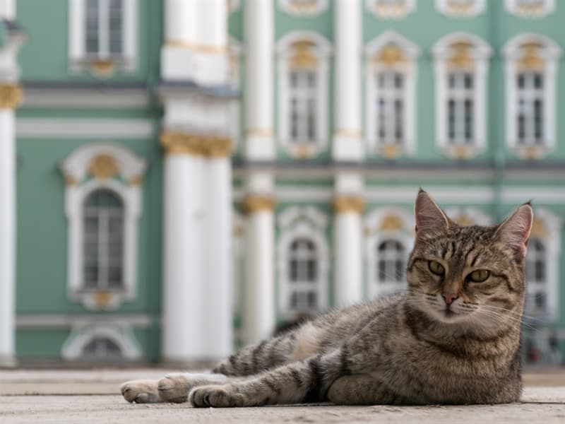 Geography Story: 50 employees with whiskers Hermitage cats Saint Petersburg Winter Palace Russia culture tourism