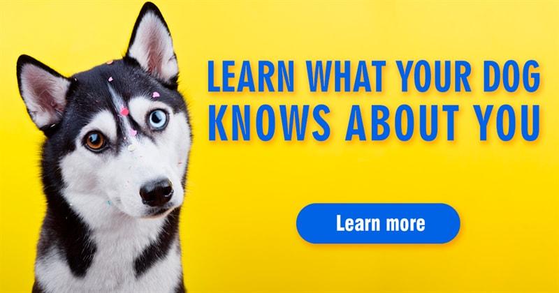 animals Story: 7 secrets behind those adorable dog eyes