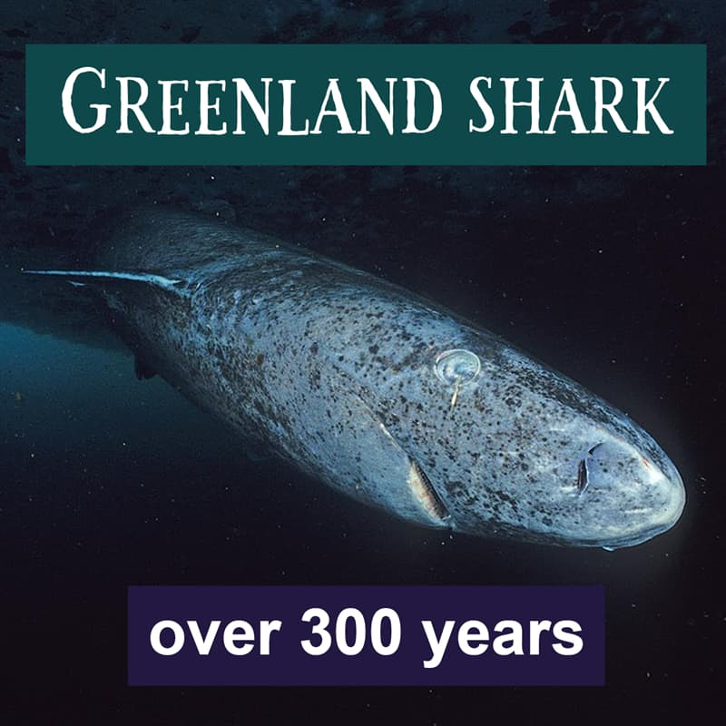 Nature Story: Greenland shark lifespan