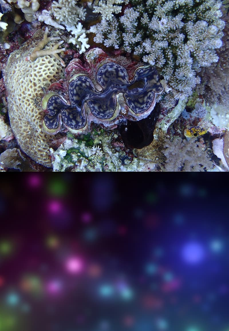 Nature Story: #1 Giant clams see colorful blobs