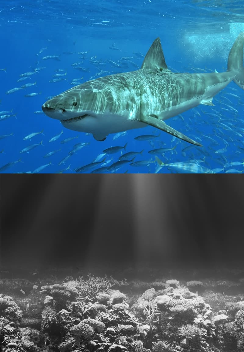 Nature Story: #2 Sharks have excellent vision in dark waters
