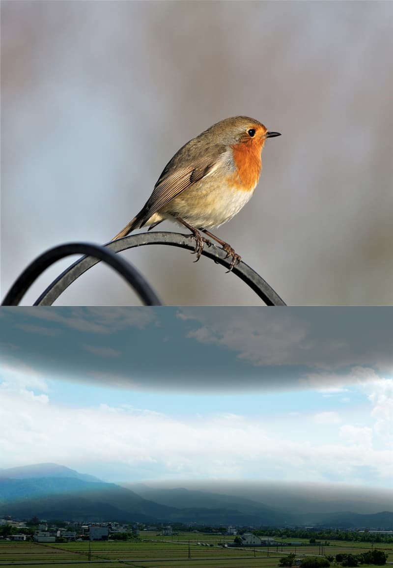 Nature Story: #4 Migratory birds can see magnetic fields