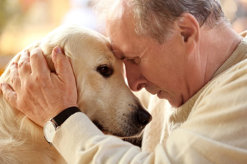 animals Story: Dogs can sense when you are sick facts about dogs
