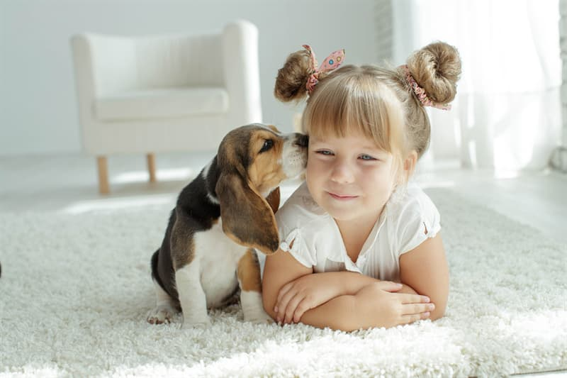 animals Story: Your dog knows when you need protection facts about dogs
