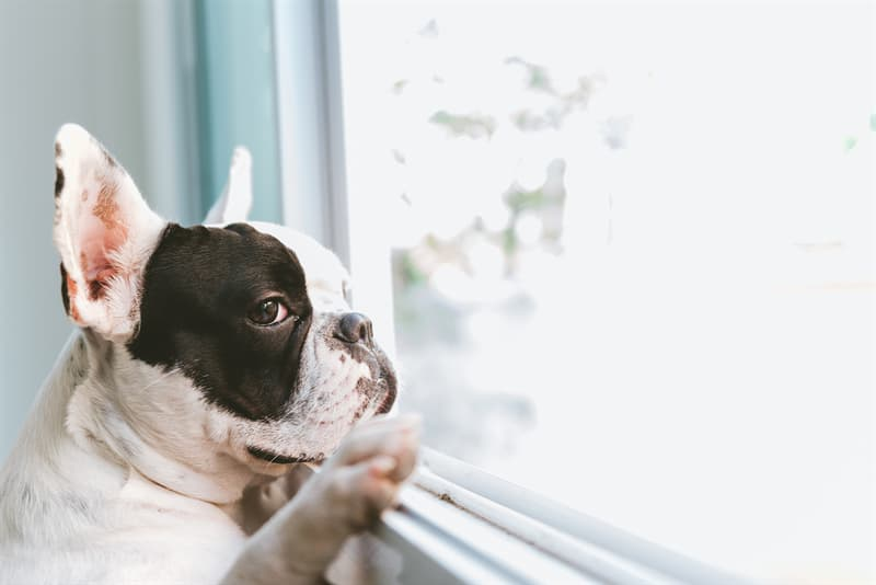 animals Story: Your dog knows you are coming home facts about dogs