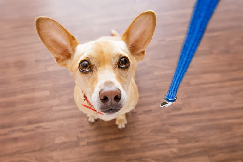 animals Story: Dogs know what you are going to do facts about dogs