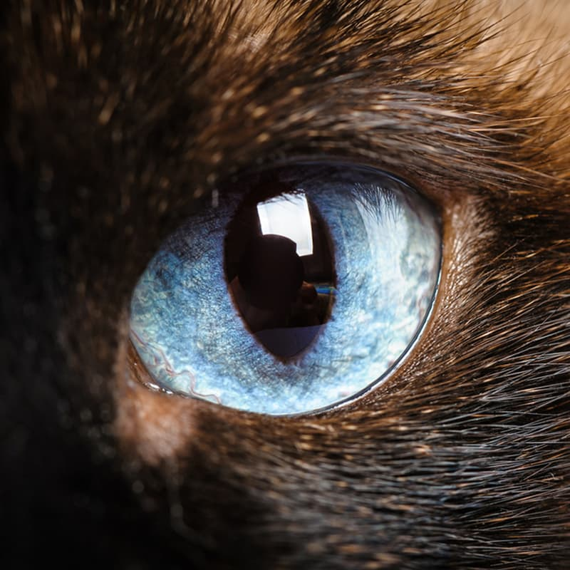 Science Story: #2 Cats probably see in the ultraviolet