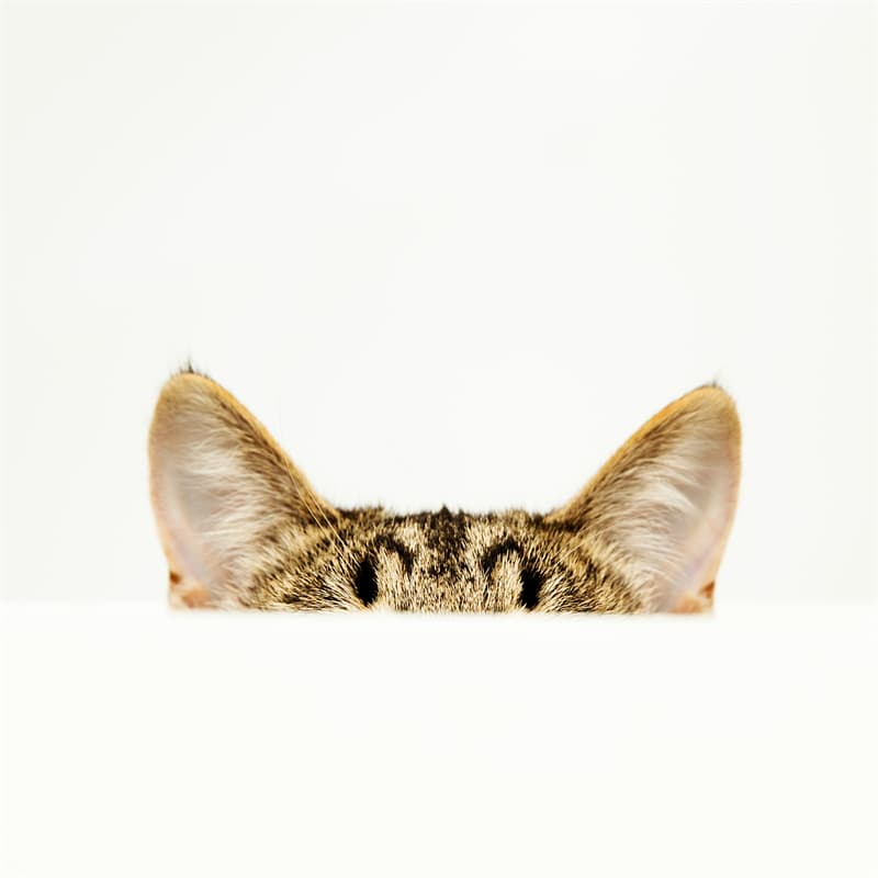 Science Story: #3 Cats have an acute sense of hearing