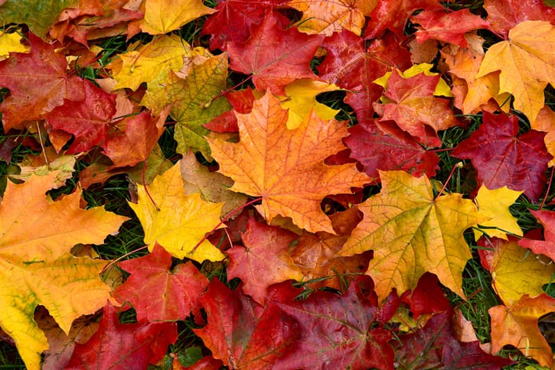 Society Story: jaw dropping facts - color of leaves