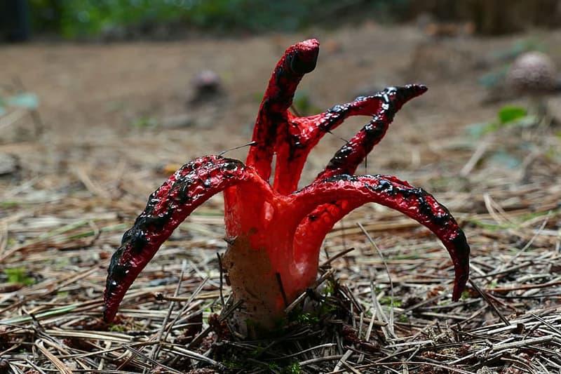 Science Story: #1 Devil's Fingers