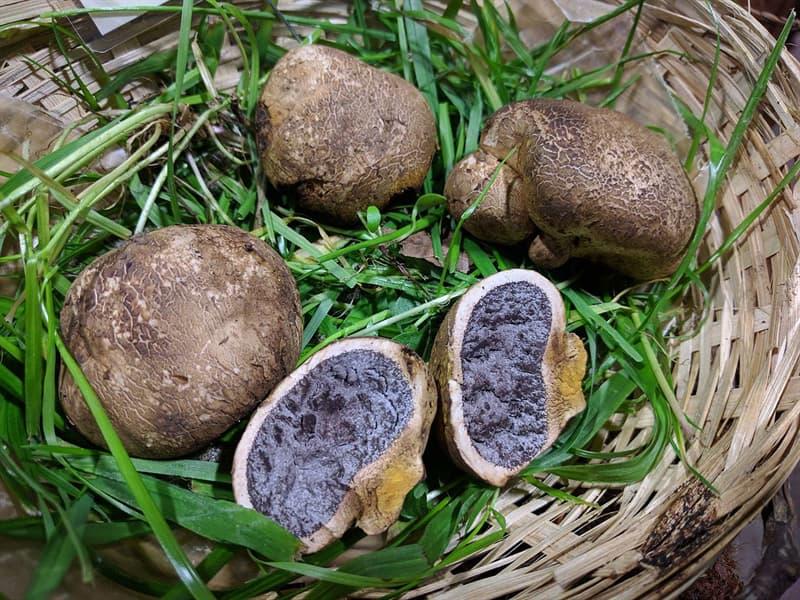 Science Story: #7 Potato Earthball