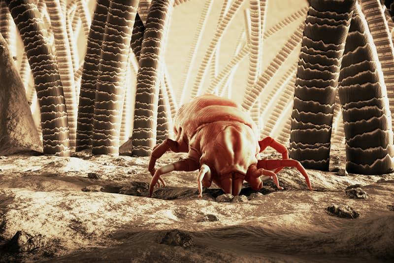 Science Story: Mites impressive facts about bodies interesting health
