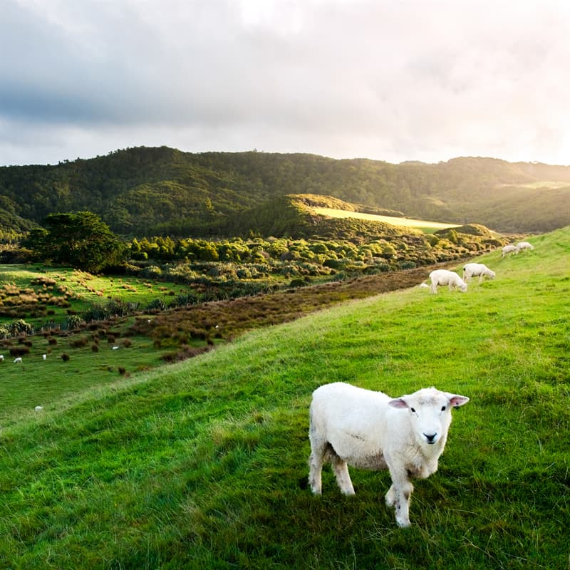 Geography Story: Facts about New Zealand population