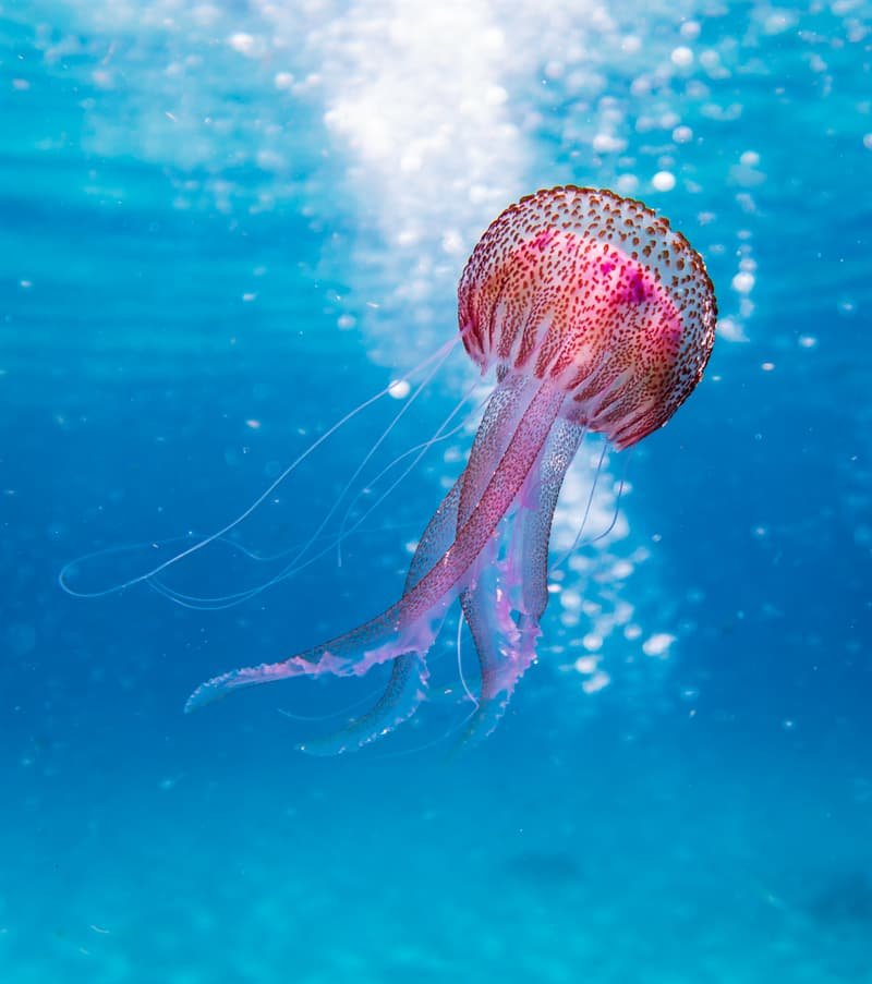 Nature Story: Are jellyfish real fish