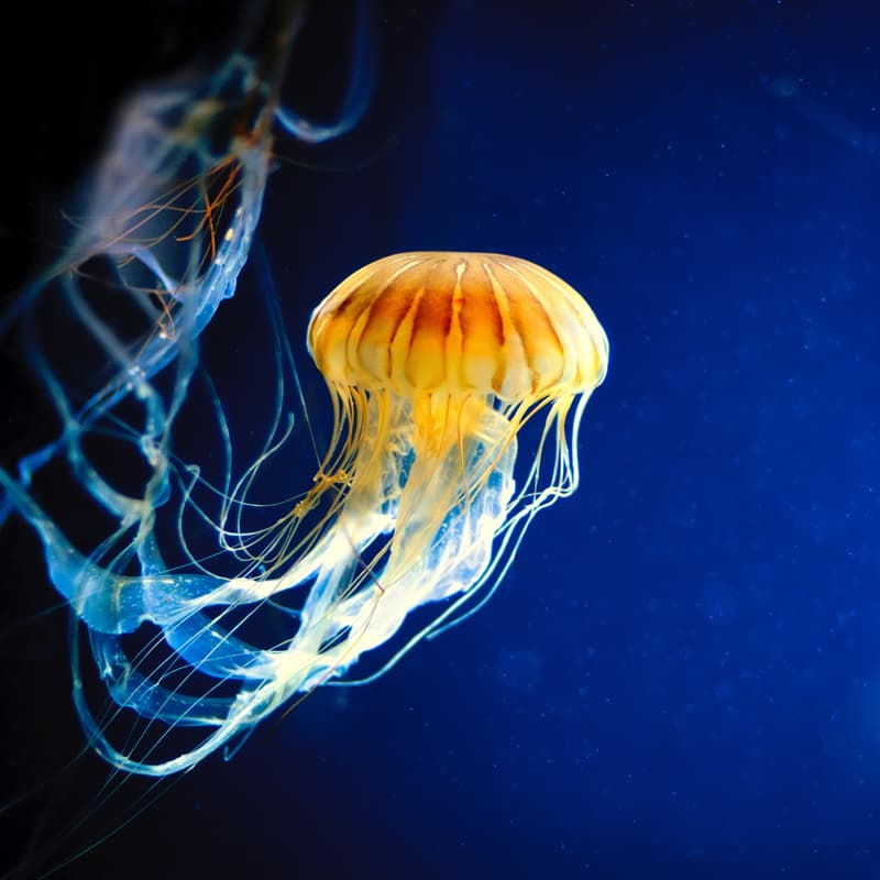 Nature Story: Jellyfish facts dinosaurs