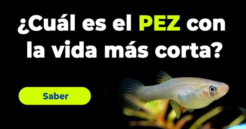 Naturaleza Historia: ¿Cuál es el pez con la vida más corta?