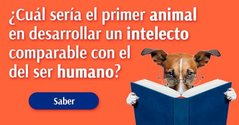 Сiencia Historia: Si los humanos nos extinguiéramos, ¿cuál sería el primer animal en desarrollar un intelecto comparable con el del ser humano?