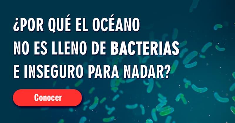 Naturaleza Historia: Si los peces defecan en el océano, ¿Por qué el océano no es un depósito de aguas negras, lleno de bacterias e inseguro para nadar?