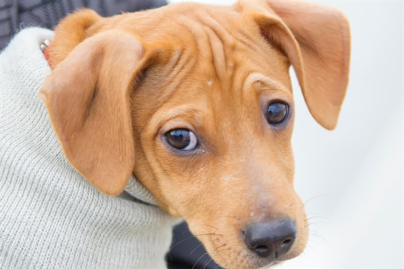 Society Story: Dogs can raise their eyebrows - inspiring facts