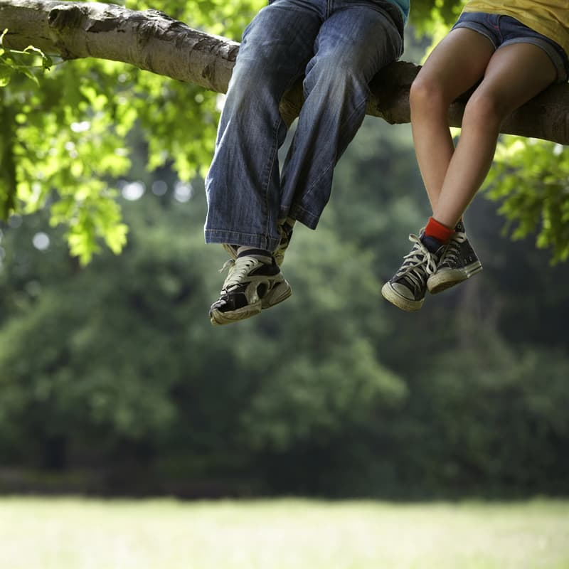 Society Story: best childhood memories climbing a tree