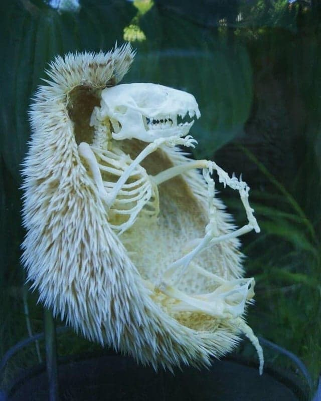 Nature Story: hedgehog's skeleton sonic the hedgehog surprising nature secret nature secrets of nature amazing nature facts icebreakers for zoom meetings virtual icebreakers fun icebreakers for virtual meetings